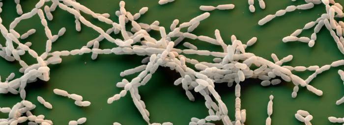Какие болезни вызывают бактерии у человека