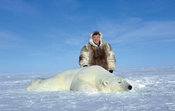 Численность белых медведей