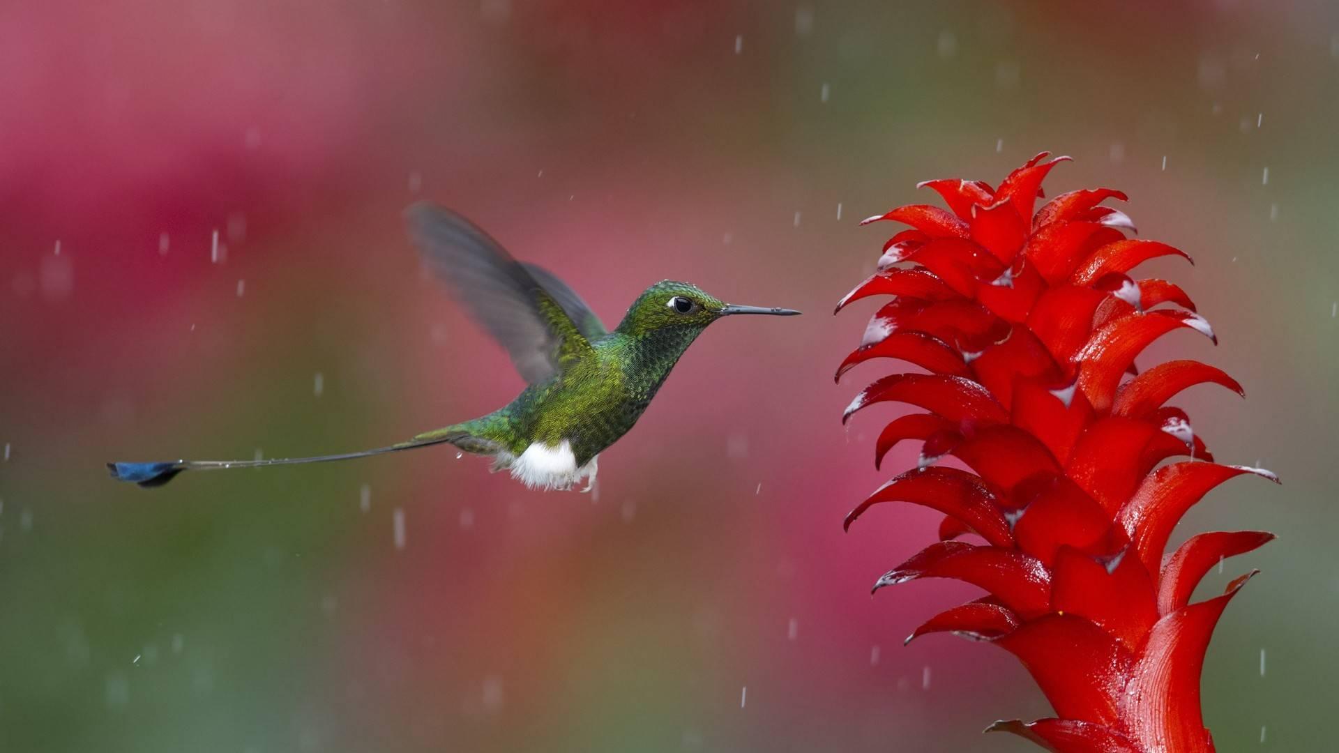 Как летает колибри