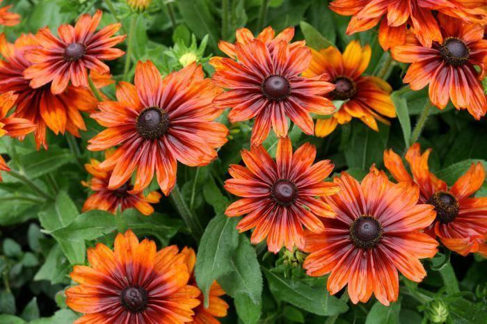 Разнообразие цветов в природе
