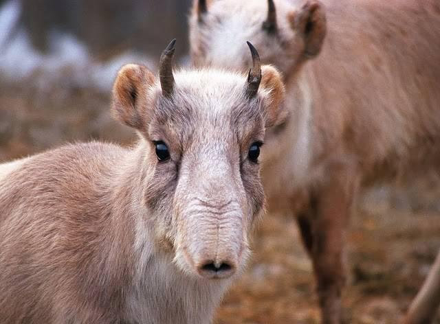 Животные умеренного пояса россии