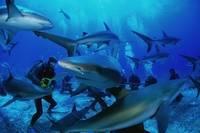 Где обитают акулы в россии
