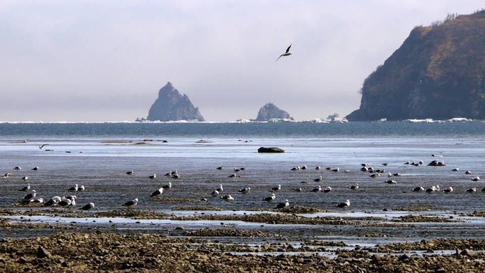 На востоке россия омывается морями тихого океана