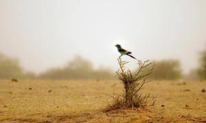 Фото варана в пустыне