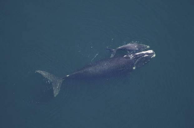 Какие животные живут в тихом океане