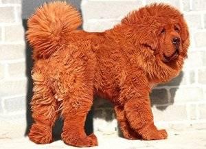 Экономическая порода собак