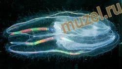 К какому типу относится медуза