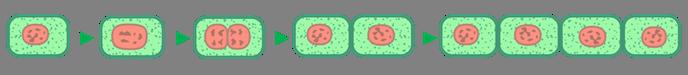 Рост клетки