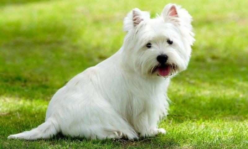 Маленькие и средние породы собак