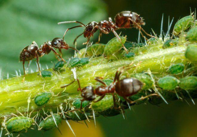 Чем видят муравьи