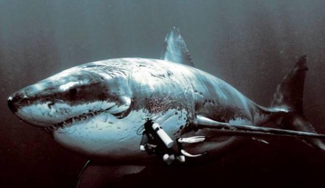 Как выглядит акула мегалодон