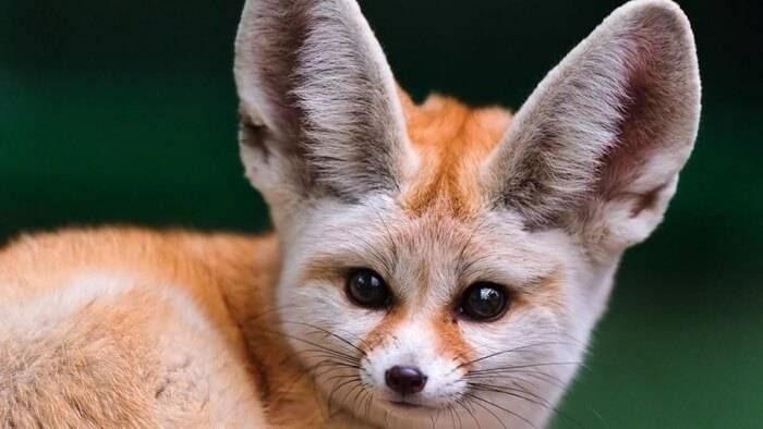 Самые красивые животные мира фото и названия