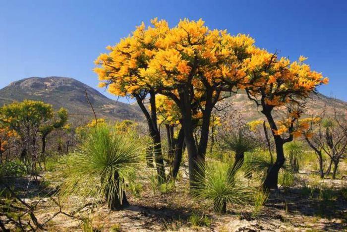 Растительность австралии