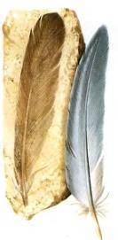 Предки птиц