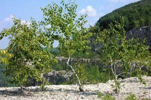 Какие растения растут в тундре название