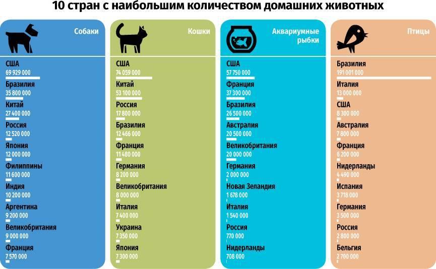 Самые популярные домашние животные в россии