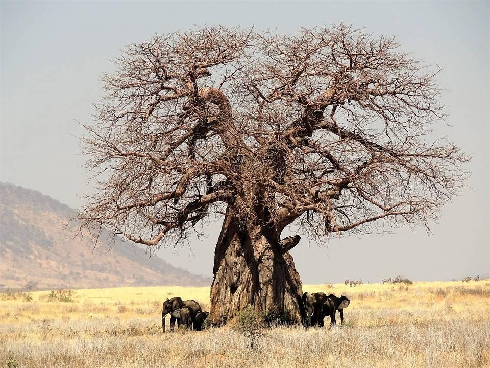 Особенности растительности пустынь