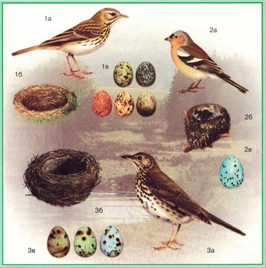 Птицы смешанного леса