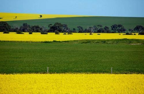 Эндемичные растения австралии