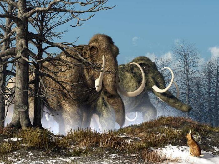 Из за чего вымерли мамонты