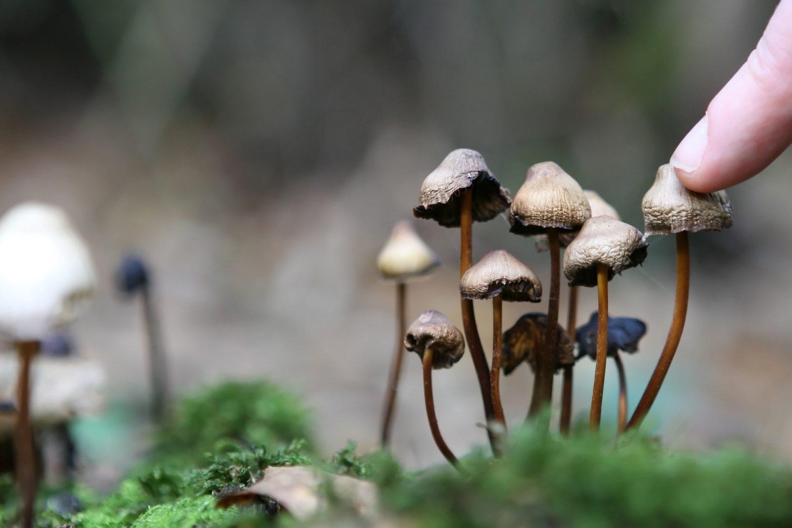 Какие грибы вызывают галлюцинации