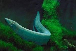 Морская рыба перечень