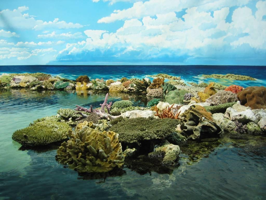 Растения и животные тихого океана