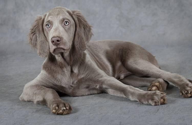 Черно белая собака порода
