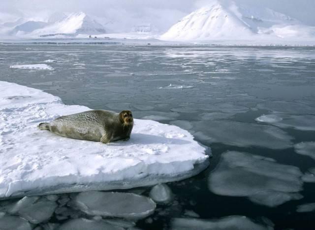 Моря северного ледовитого океана омывающие берега россии