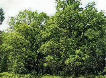 Деятельность человека в широколиственных лесах