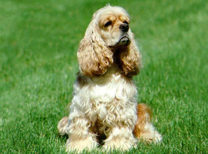 Самые востребованные породы собак в россии
