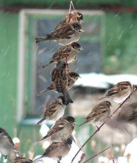 Какие птицы строят гнезда в январе