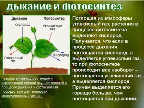 В результате фотосинтеза в растениях образуются