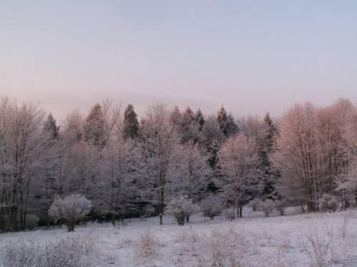Деревья смешанного леса названия