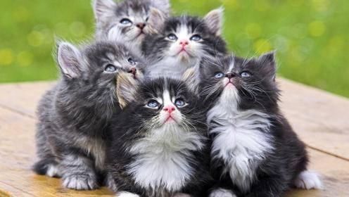 Породы кошек краткое описание