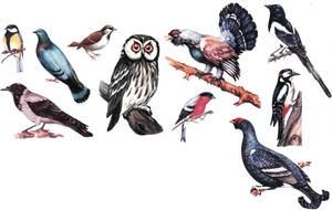Неперелетные птицы россии