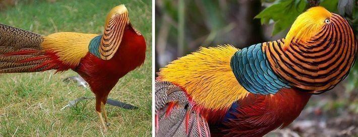 Редкие красивые животные