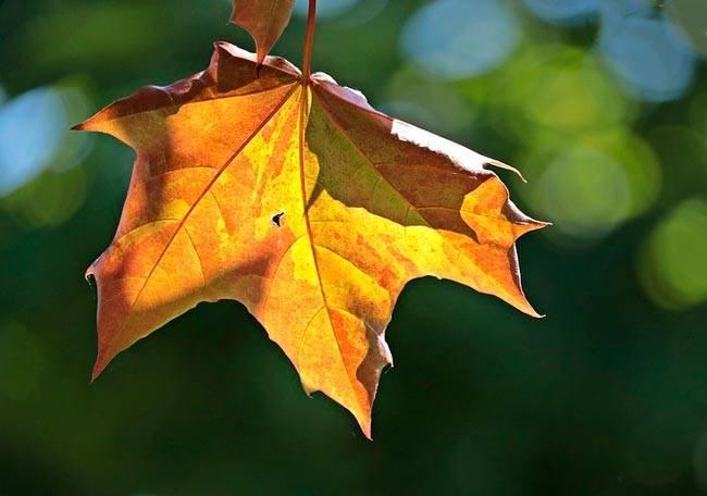 Сочинение про октябрь
