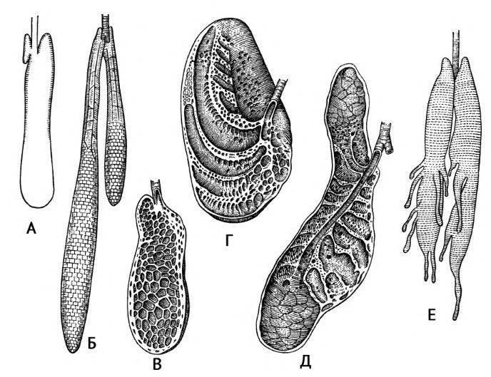 Органы дыхания рептилий