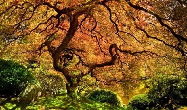 Деревья австралии фото с названиями