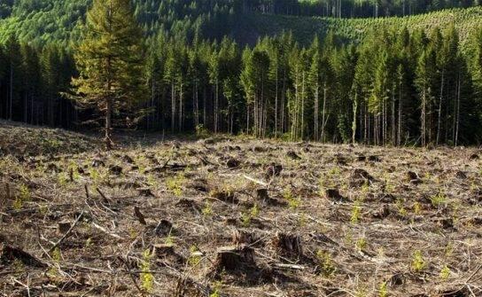 Каковы причины обезлесения территорий