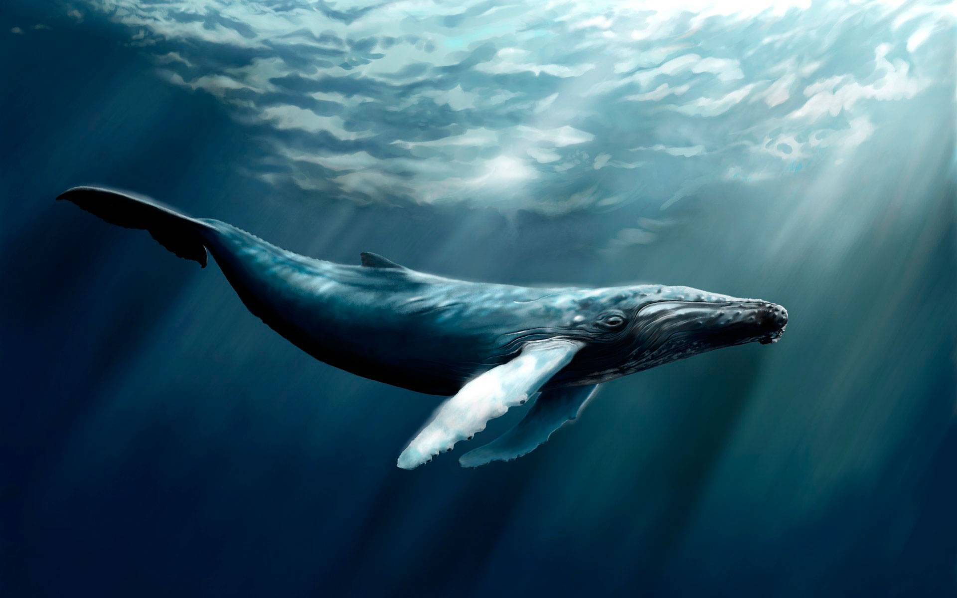 Черно белый кит