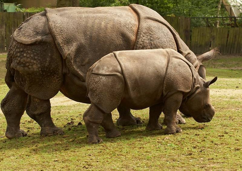 Носорог среда обитания