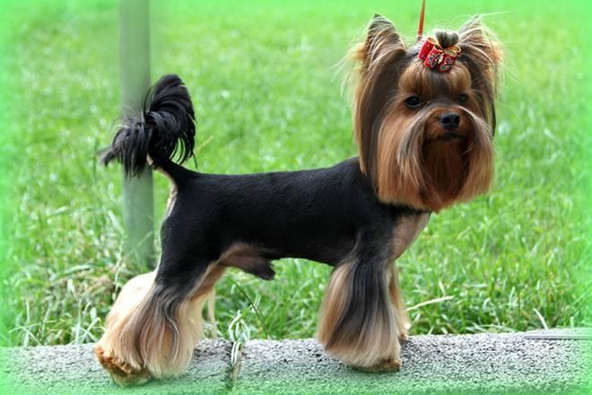 Породы собак которые не растут