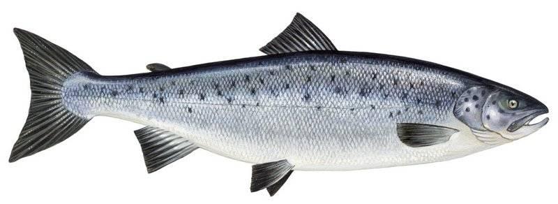 Интересные факты о рыбах для детей