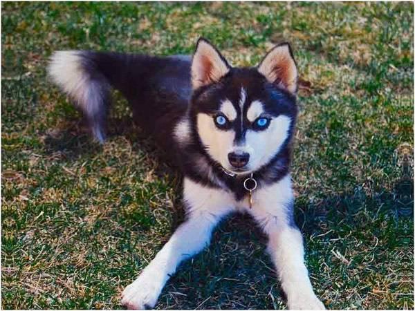 Какая самая дорогая собака в мире