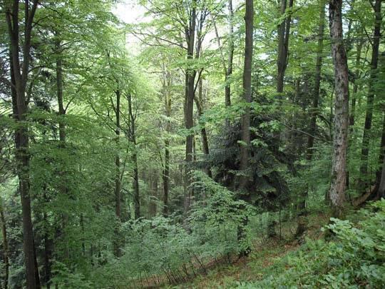 Географическое положение зоны лесов