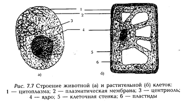 Виды клеток человека