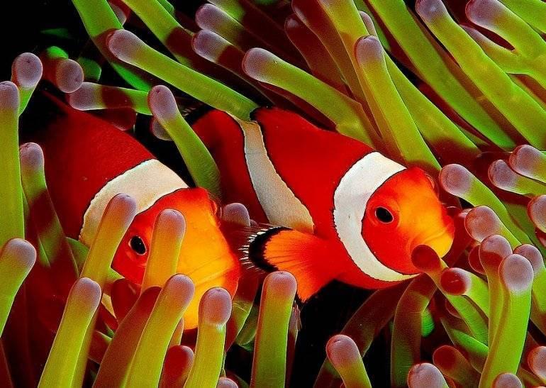 Океанические обитатели