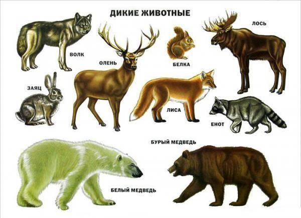 Какую пользу приносят дикие животные людям